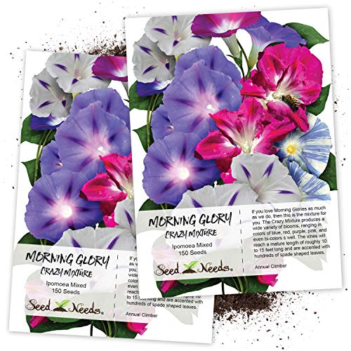 Seed Needs, Morning Glory'Crazy Mixture' (Ipomoea Mixture) Twin Pack of 150 Seeds Each