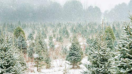 albero di natale ontario Azienda Agricola Dell'Albero di Natale in Ontario