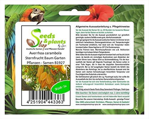 Stk - 5x Averrhoa carambola Sternfrucht Baum Garten Pflanzen - Samen B1927 - Seeds Plants Shop Samenbank Pfullingen Patrik Ipsa