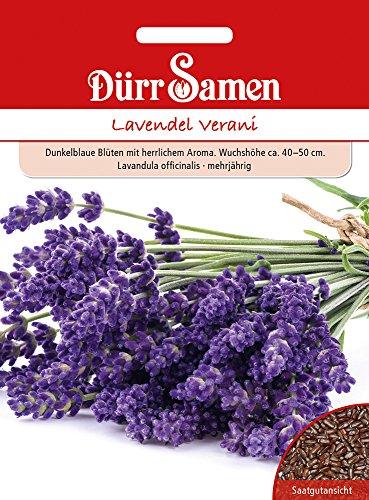 Dürr Samen 4386 Lavendel Verani (Lavendelsamen)