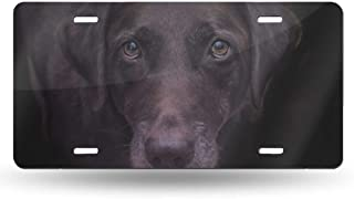 IDNUYIA Lab Dog Chocolate Domestic Design Novelty License Plate Tag Sign