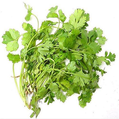 Healthy Coriandre Herb Seeds High Yield Fruitful quatre saisons peuvent pousser les graines de coriandre plantes Bonsai Maison et Jardin 100 graines