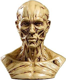 TOYANDONA Head Anatomy Half Human Model Craft Resin Skull Sculpture Head Muscles Bone for Medical Artist Drawing Study Off...