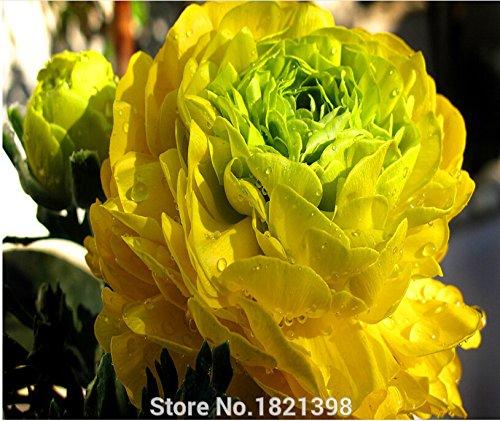 Hot Vivid Automne artificielle Pivoine Fleur Posy SeedsAndPlants Chambre Hydrangea Bridal 10pc graines de pivoine chinois graines de fleurs