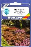 Heidekraut, Erika, Calluna vulgaris, ca. 500 Samen