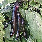 Potseed Samen Keimung: 50 - Seeds: Shikou Hybrid Aubergine Seeds - Verwenden Shikou in Wokgerichte Grill es in Long Scheiben!