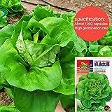1000 semi di semi di lattuga verde a rapida crescita insalata di verdure commestibili foglie di frutta per giardino domestico piantagione cortile all'aperto fattoria