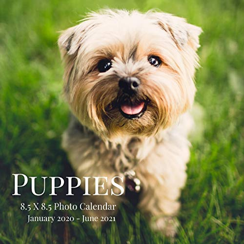 Puppies 8.5 X 8.5 Photo Calendar January 2020 - June 2021: 18 Monthly Mini Picture Calendar Book| Cute 2020-2021 Year Blank At A Glance Monthly ... Country Photograph Desk Calendars, Band 1)