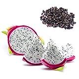 AIMADO Samen-10 Stück Drachenfrucht Kaktus Saatgut schnellwüchsiger bio Obst mehrjährig,essbare süße Fruchtfleisch,exotische Samen für Garten