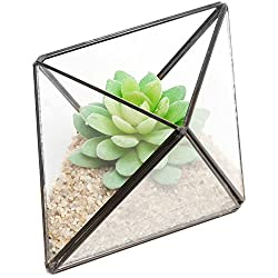 Modern Diamond Design Clear Faceted Succulent