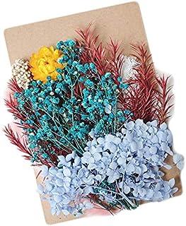ブリザードフラワー ハーバリウム ドライフラワー 花材 ハンドメイドに (水色、赤、黄色)