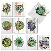 Shiplap Succulents - 10 All Occasion Note Cards with Envelope (4 x 5.12 Inch) - Assorted Colorful Plants, Greeting Cards for Plant Lovers - Nature Stationery Notecard Pack Set AM6438OCB-B1x10 [並行輸入品]