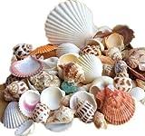 E-Randi Lot de 210 coquillages de mer mixtes, océan, coquillages de différentes tailles naturelles, décoration pour maison, mariage, thème plage, artisanat, aquarium.