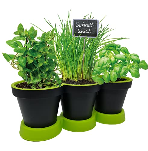 Pilix Maceta para hierbas de cocina, color antracita/menta, 2 piezas, jardín de hierbas para balcón, macetas de plástico