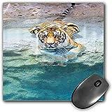 Mouse Pad Gaming Funcional Conjunto de safari Alfombrilla de ratón gruesa impermeable para escritorio Imagen de un tigre de Bengala tendido cerca del agua Vida salvaje Cueva de piedra Relájese en el a