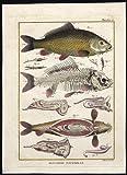 Antique Fish Print-CARP-SKELETON-ANATOMY-ORGANS-INTESTINES-Bonnaterre-1788