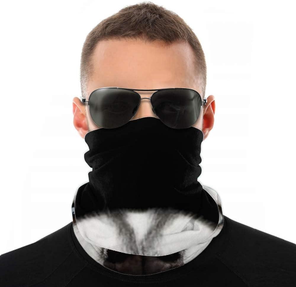 Headbands For Men Women Neck Gaiter, Face Mask, Headband, Scarf Close Head Peeking Siberian Husky Dog Turban Multi Scarf Double Sided Print Head Bands For Sport Outdoor