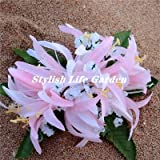 TOMHY Sales! 100Pcs Spider Lily Flower Bonsai, Perfume Lily Flower Flores,Rare Lily Flower Garden Plant, Yard Balcony Decoration : 16