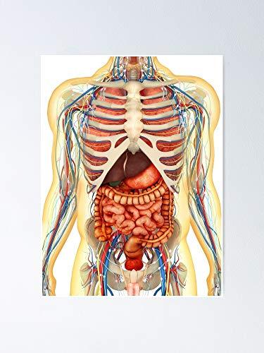AZSTEEL Póster de cuerpo humano con órganos internos del s