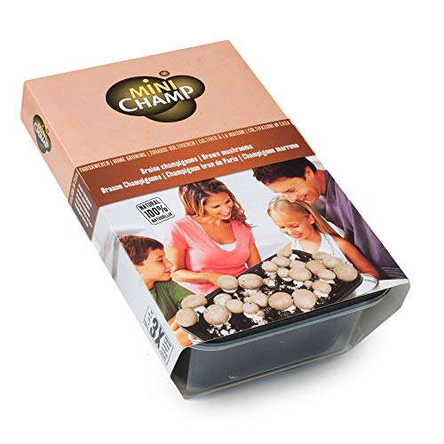 Pilze Züchten Set | Agaricus bisporus var. avellaneus | Bio Champignons braun | Selbst Züchten | Pflanzen Gemüse | Zucht Box 3L