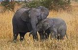 YHKTYV Dos Pequeños Elefantes Que Dependen El Uno del Otro. 200 Piezas Puzzle Decoración para El Hogar Juego De Rompecabezas De Relajación Brain Challenge Juguetes Intelectuales DIY Regalo