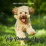 Toy Poodle Dog 2021-2022 Calendar: July 2021 - dec 2022 ,8.5 x 8.5 inch, 18 Months Dog Lover s Calendar