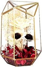 Yousun01 Glass Geometric Terrarium, 9.96 inch Height Handmade Irregular Terrarium Indoor Tabletop Windowsill Display Box Succulent Plant Planter LED Decor Light Box for Moss/Air Plant/Eternal Flower