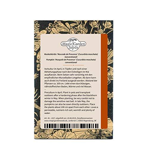Französischer Muskatkürbis 'Muscade de Provence' (Cucurbita moschata) 5 Samen