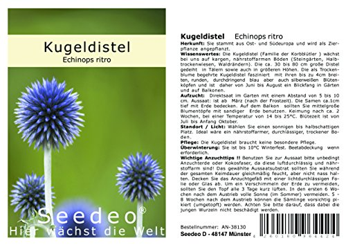 Seedeo® Kugeldistel (Echinops ritro) 25 Samen