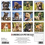 Just American Pit Bull Terriers 2020 Wall Calendar (Dog Breed Calendar) 4