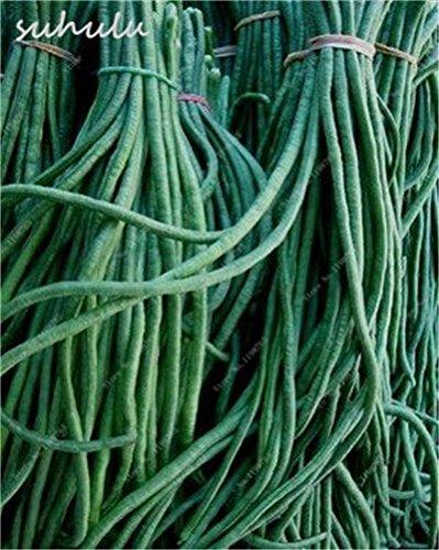 8 Pcs Multi Color haricots desserrées graine long des haricots semences Graines de plantes en pot poussent plus vite Fleurs vivaces Jardin Plante 11