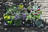 20 Different Alpine Rockery Plants in 9cm POTS ~ Quality Alpines Direct from Specialist Grower in Lincolnshire
