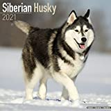 Siberian Husky 2021 Calendar | Square Dog Breed Wall Calendar | 16 Month