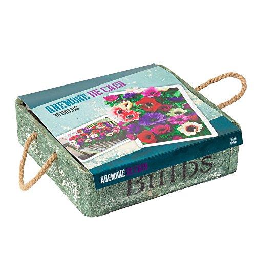 Pflanz-Set Geschenkidee Cottage Style Anemone Set Samen Blumenzwiebeln Saatgut von notrash2003®