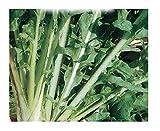 Inception Pro Infinite 4000 C.ca Semi Indivia Scarola Cardoncella Barese - Cichorium endivia - In Confezione Originale - Prodotto in Italia - Indivia - IN005