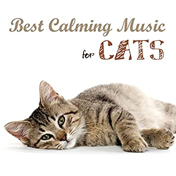Best Calming Music for Cats