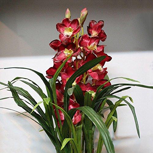 100 graines / paquet pendaison fleur rouge fleur ondulée JS0681 chinois Cymbidium Orchid graines de fournitures de jardin
