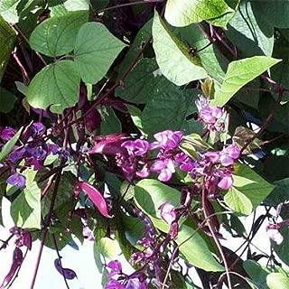 Outsidepride Hyacinth Bean - 100 Seeds