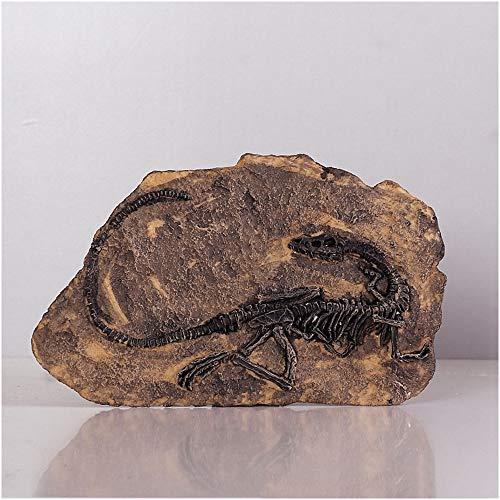 Dinosaurio colgar de la pared Inosaur esqueleto estatua Modelo - creativo Jurásico Paleontología Modelo Esqueleto - dinosaurio fósil esquelética - para la decoración casera, regalo para el adulto,A