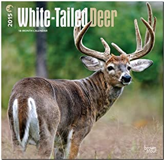White-Tailed Deer 2015 Wall Calendar by BrownTrout Publishers Ltd. (2014-09-01)