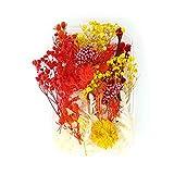 Kunstharz.Art Flores secas para joyas de resina en azul, rosa, morado, rosa y verde (rojo).