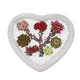 Macetas Maceta en forma de corazón maceta de piedra natural macetas jardín creativo escritorio pequeño maceta de flor adecuada para plantas pequeñas decoración del hogar macetas para ( Color : White )