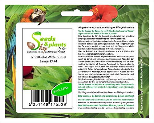 Stk - 6500x Schnittsalat Witte Dunsel- Salat Samen Gemüse K474 - Seeds Plants Shop Samenbank Pfullingen Patrik Ipsa