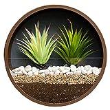 RRSHUN - Maceta de pared redonda de cristal, jarrón de pared de metal con forma redonda, para interiores, vertical, para colgar en la pared, de 25 x 25 x 5 cm