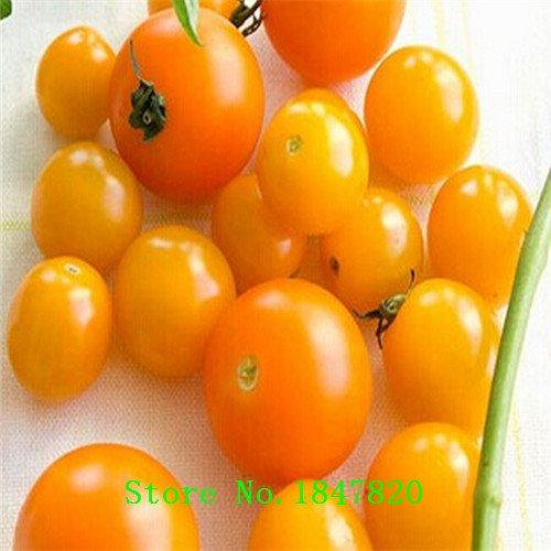 De nouvelles graines de tomates cerises, tomates rouges tomates cerises, légumes graines de fruits environ 50 particules jaune
