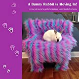 A Bunny Rabbit Is Moving In!: A New Pet Owner s Guide to Raising a Bunny Inside the Home