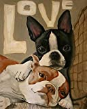 HCDZF DIY Paint by Numbers for Adults Boston Terrier Colorful Cute Pet Dog for Kids Adults Beginner Drawing with Brushes Christmas Decor Decorations Gifts 40x50cm(Frameless)