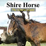 Stanzer, E: Shire Horse - The gentle giant (Wall Calendar 20 (Calvendo Animals) - Elisabeth Stanzer
