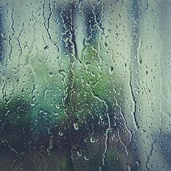 Rain Recordings: The Forest Rainscape