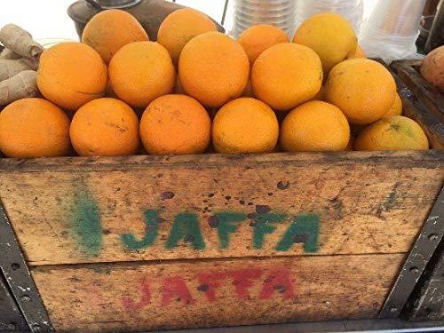 PLAT FIRM GERMINATIONSAMEN: 40 Samen: USA Erbstück Jaffa Orange Tree 10-80 Samen